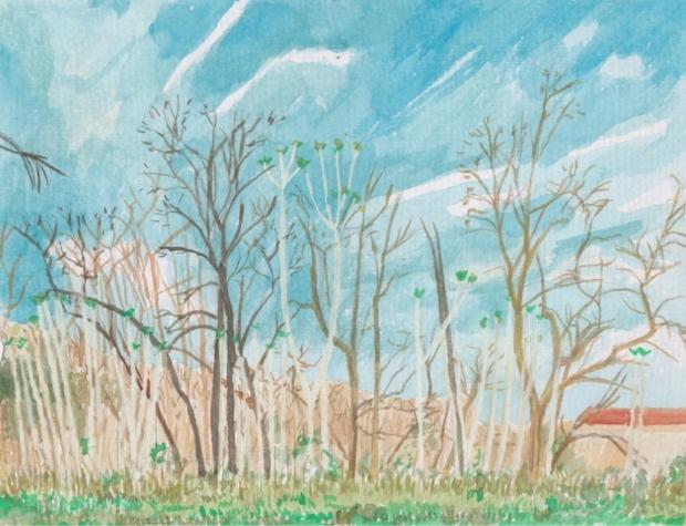 wierd trees