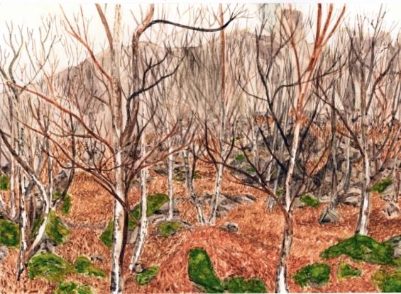 xCurbar Trees